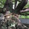 木からいただいたメッセージ