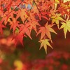 【節約】食欲の秋!… (`・ω・´;)独身 氷河期世代の家計簿(2019年10月)