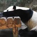 婚活パンダのおごられグルメ。