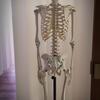 体の不調が出る前に骨格ドックは不調を教えてくれる。