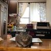 キッチンの窓をブラインドからカーテンに変えたら部屋が明るくなりました