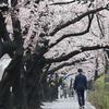 (韓国反応) 抽選当選者だけが汝矣島の桜を楽しむ…市民「今こそやるべきことだ」 「桜の花の請約で敵味方に分けるのか」。