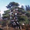 群馬の巨木