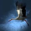 【疑問】大雨台風の時、鳥たちはどうしてるのか?