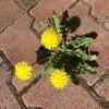 花から学ぶ華のある人とは?華のある人の特徴について