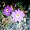 1月4 日誕生日の花と花言葉歌句