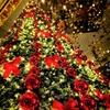年を越すクリスマスツリー(前編) in Hanoi