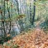 森を楽しむ