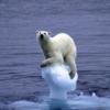 温暖化対策で航空運賃も?