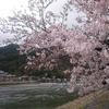 【番外編】京都お花見ジョグ(2020/3/29) 西京極~嵐山~今出川編