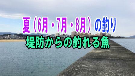 夏(6月・7月・8月)の釣り 堤防からの釣れる魚