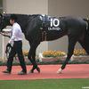 京王杯スプリングC  僕の大好きな馬