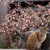 木瓜と猫(2)