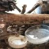 カナヘビ に亀の餌を食べさせる方法