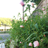 ★薄桃色の花