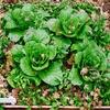 野菜たちが創る芸術空間!箱庭菜園 成長の記録。