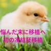 【不妊治療】移植か採卵かで悩んだ結果、自然周期での移植へ