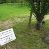 説明板諸相:記念樹と大学名