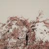 4月の雪化粧