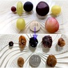 ぶどうマニアライターが7種の「自家製レーズン」を作って食べ比べてみた【シャインマスカット、デラウェアetc.】