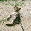 可愛いキジトラの子猫を保護した時の話