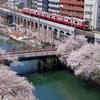 京急 大岡川の桜 2019 その2