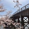 着物を着て桜を見に行く