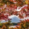 紅葉撮影紀行2019!! 河口湖の紅葉が見頃です (^^♪