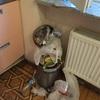 【アゼルバイジャン】キッチンのごみ箱とやっと干されたシーツ