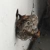 湖西市で外壁にできたハチの巣を退治してきました!