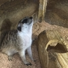 マシュマロパンダ|犬・猫・爬虫類とふれあえるアニマルカフェ:群馬県前橋市