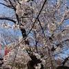 上野の桜を見物