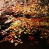 紅葉もライトアップも夜景も同時に楽しめる京都最強デートスポット