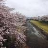生き生きした、チューリップに誘われて 木曽三川公園