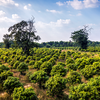 【第1弾】カンボジアで1000年続く事業への挑戦~Svay Chek Organic Farmの紹介~
