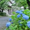 野中邦子もたのしみ!福岡のオススメ紫陽花イベント☔