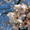 """【まとめ】大垣市周辺の""""季節の花リスト""""を公開します"""