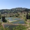 階段のように連なる美しい景観 山古志「棚田と棚池」