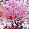 上野駅の桜とパンダ、あんみつ「みはし」に行く