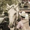 【一日一枚写真】馬車の休憩【一眼レフ】