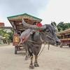 GO TO石垣島④:竹富島への日帰り旅行もGo Toトラベルを活用!フェリー&水牛車観光