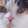 【猫】しーたろ誕生日【はぴば】