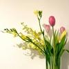 【週末番外編】受験前の皆様に役立ちそうな小話135_最近のできごと。農林水産省の花のキャンペーンに当選しました