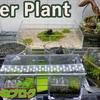水草の栽培実験~キューバパールグラス編~第2回経過報告書