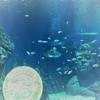 シーライフ Bangkokで、初めての海釣りの魚種を確認してみます