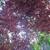 10月19日のお花のお届けは、秋を先取る紅葉の葉っぱをメインに活けました。