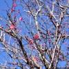 45. 四季を感じる鎌倉の暮らし