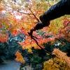 雪が降ったので御苑に紅葉を見に行った