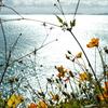 海風を浴びて咲く花