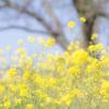 3日間の酵素ファスティング(断食)に挑戦‼︎春だからこその嬉しい効果や変化も♪